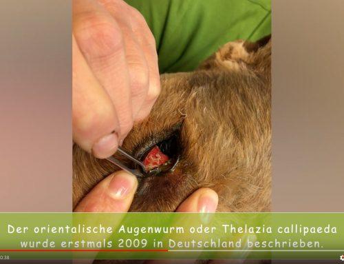 Praxisfälle: Seltener Augenwurm entdeckt